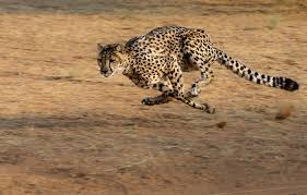 حيوانات سريعة