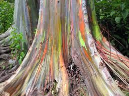 اشجار ملونة