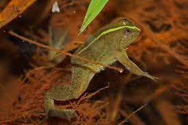 بحيرة اوكو - حيوانات منقرضة: الأنواع التي فقدناها في 2019