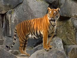 الهند الصينية - حيوانات منقرضة: الأنواع التي فقدناها في 2019