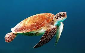 Glowing Sea Turtle - حيوانات عجيبة أفضل 10 حيوانات فريدة ومميزة من نوعها