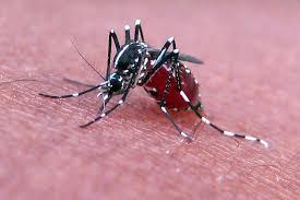Mosquito - حيوانات خطيرة أكثر 10 حيوانات خطورة في أفريقيا