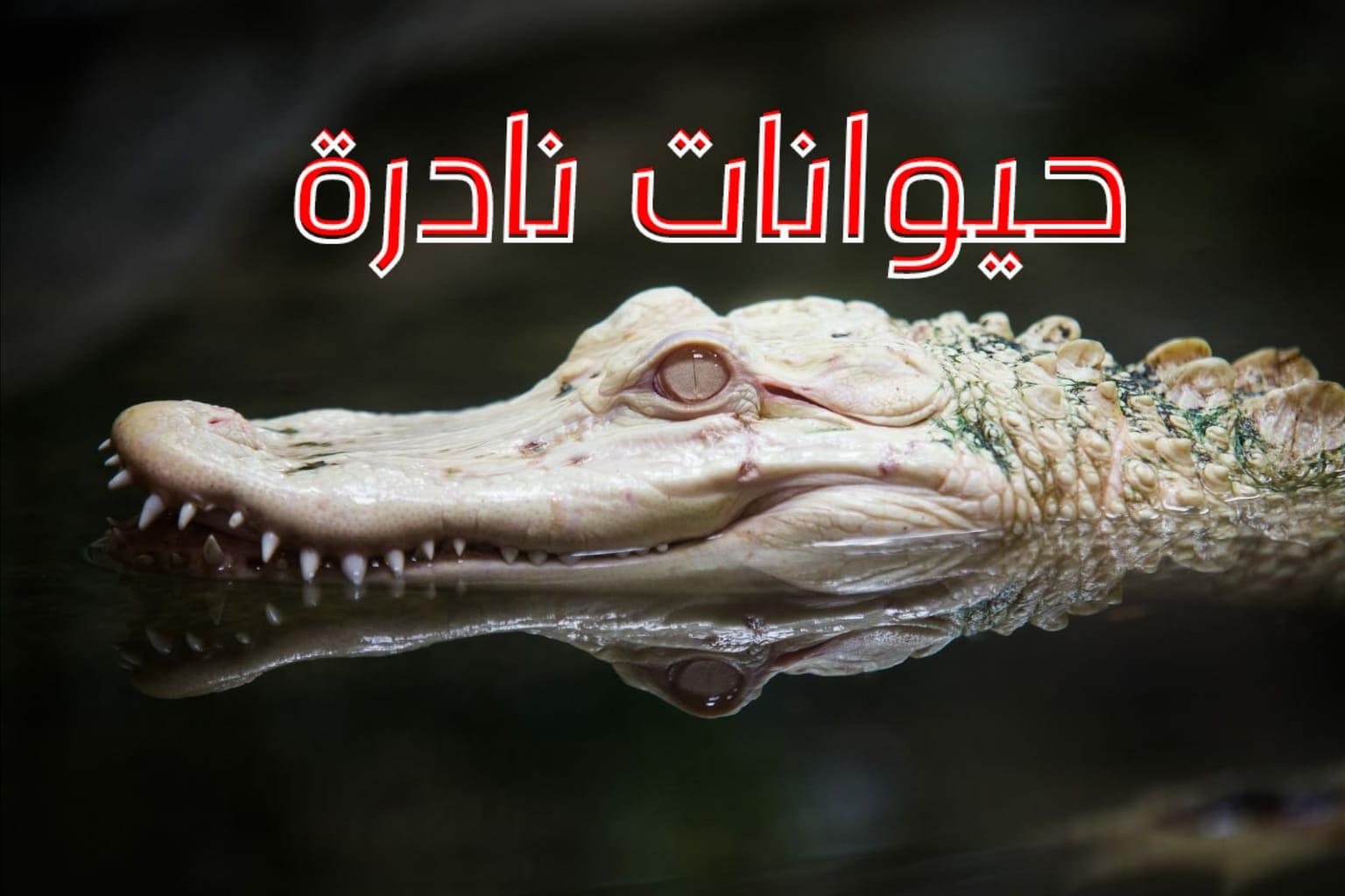 WhatsApp Image 2020 06 08 at 11.45.43 PM - أغرب وأندر الحيوانات في العالم