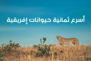 WhatsApp Image 2020 06 09 at 12.14.03 PM 300x200 - أسرع الحيوانات في إفريقيا