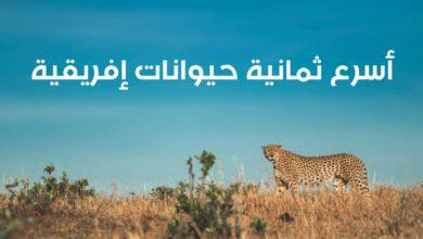 WhatsApp Image 2020 06 09 at 12.14.03 PM 390x220 - أسرع الحيوانات في إفريقيا