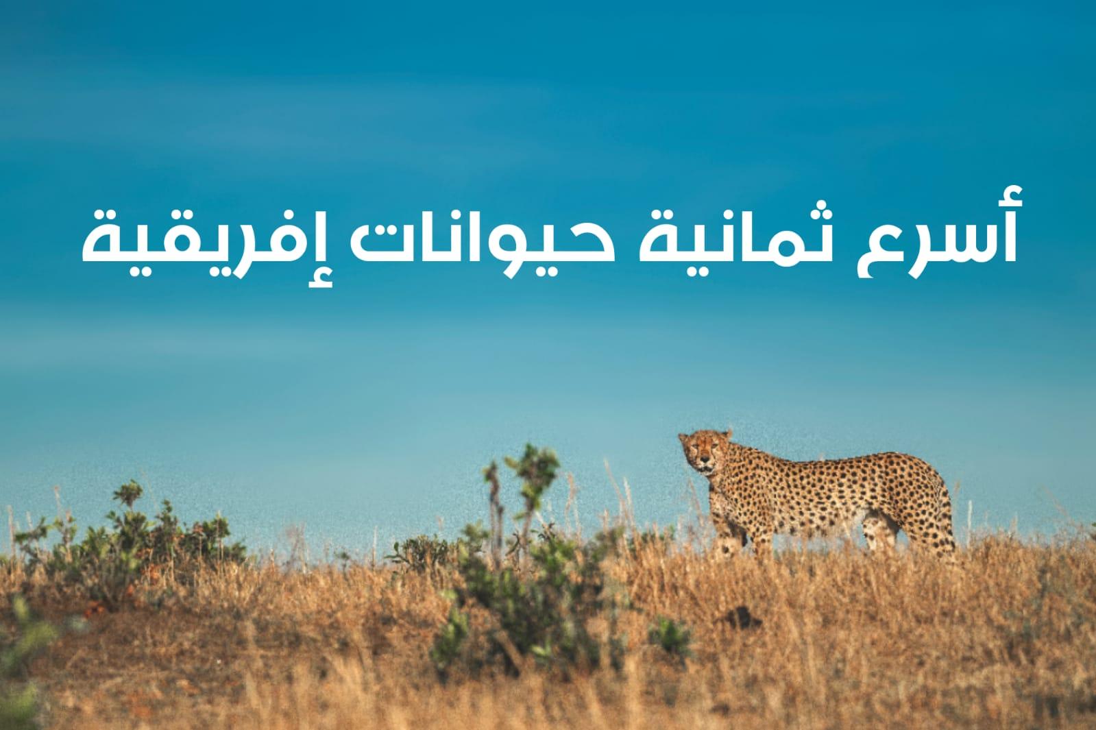 WhatsApp Image 2020 06 09 at 12.14.03 PM - أسرع الحيوانات في إفريقيا