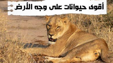 WhatsApp Image 2020 06 10 at 1.58.19 AM 390x220 - أقوى الحيوانات توب 10 أقوى حيوانات برية