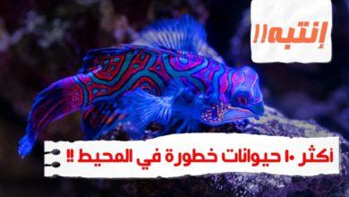 WhatsApp Image 2020 06 13 at 1.28.44 AM 390x220 - حيوانات خطيرة أكثر 10 حيوانات خطورة في المحيط