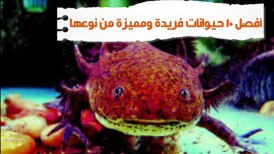 WhatsApp Image 2020 06 13 at 3.54.33 PM 390x220 - حيوانات عجيبة أفضل 10 حيوانات فريدة ومميزة من نوعها