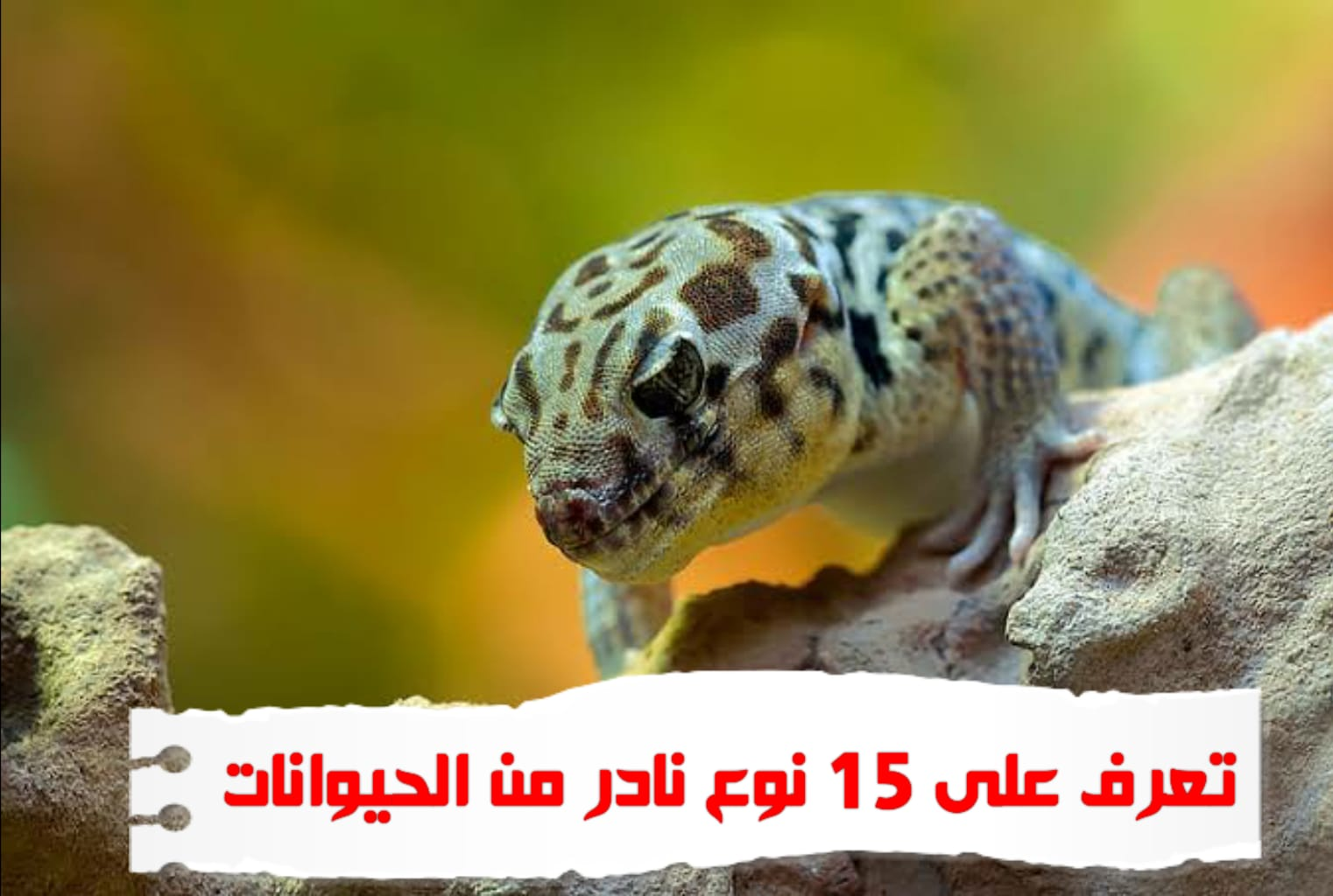 WhatsApp Image 2020 06 21 at 6.26.55 PM - حيوانات نادرة هذه هي أندر الحيوانات في العالم