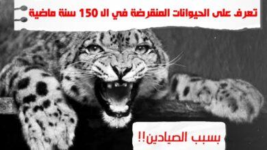 WhatsApp Image 2020 06 22 at 5.59.21 AM 390x220 - حيوانات منقرضة في الـ 150 سنة الماضية، بسبب الصيادين