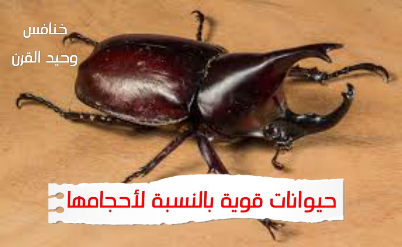 WhatsApp Image 2020 06 23 at 10.23.58 PM - حيوانات صغيرة لاكنها قوية - حيوانات قوية بالنسبة لأحجامها