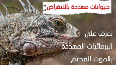 WhatsApp Image 2020 06 24 at 4.09.16 AM 390x220 - حيوانات مهددة بالإنقراض برمائيات مهددة بالإنقراض