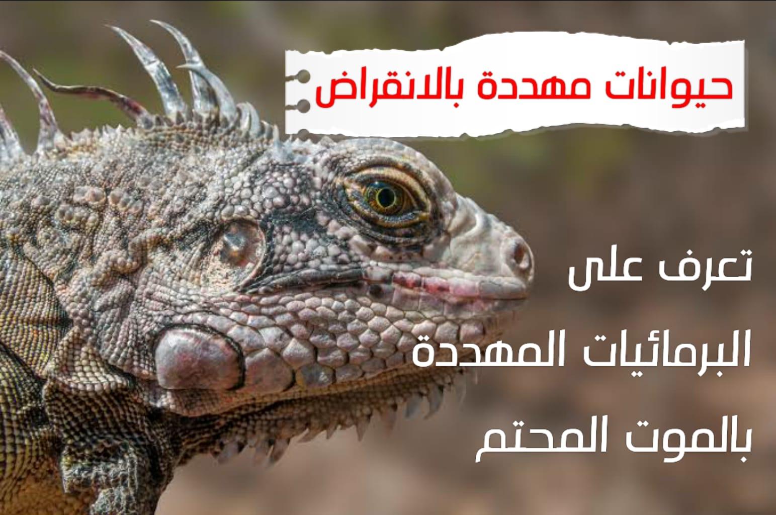 WhatsApp Image 2020 06 24 at 4.09.16 AM - حيوانات مهددة بالإنقراض برمائيات مهددة بالإنقراض