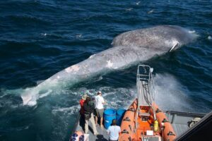 WhatsApp Image 2020 06 24 at 5.35.49 PM 1 300x200 - ما هو أكبر حيوان موجود على الأرض؟