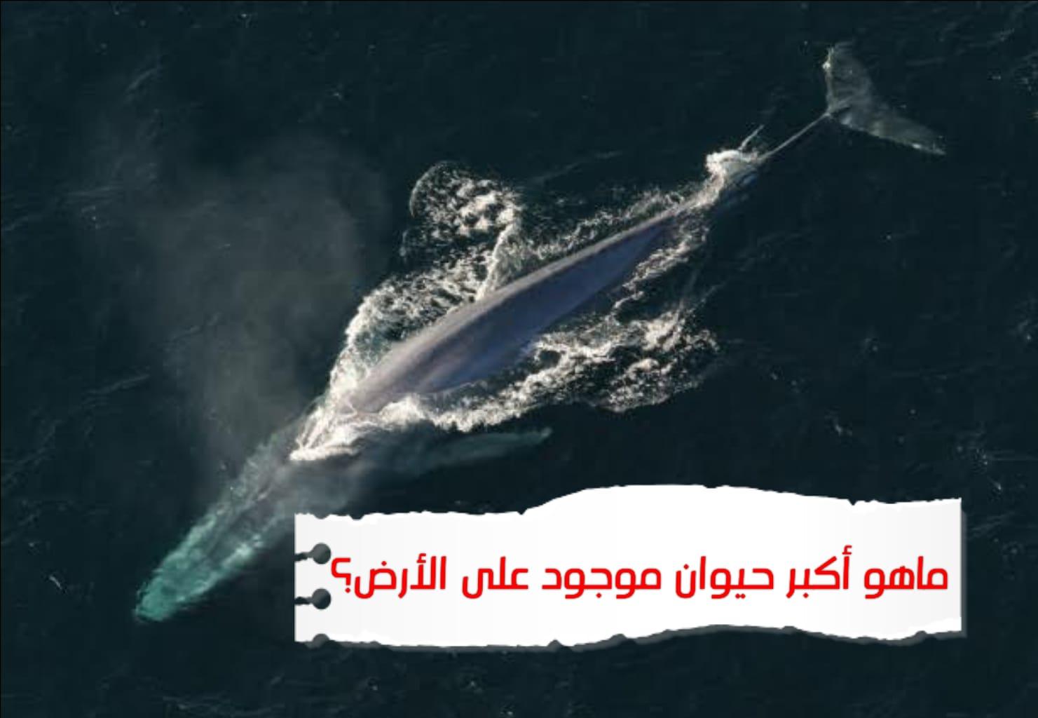 WhatsApp Image 2020 06 24 at 5.35.49 PM - ما هو أكبر حيوان موجود على الأرض؟