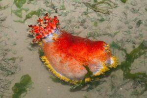حيوان بحري غريب