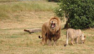 أكثر الحيوانات فتكًا في العالم