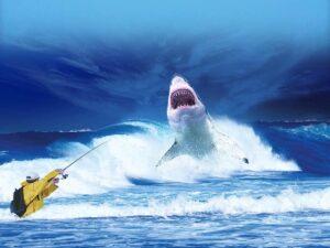 اسماك القرش القاتلة
