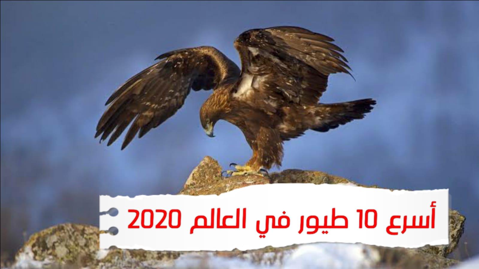 WhatsApp Image 2020 07 04 at 7.01.16 AM - أسرع 10 طيور في العالم ( بسرعات مستحيلة!! )