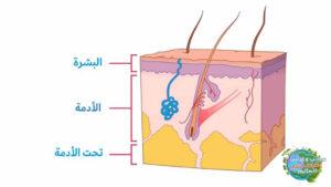 هو الجلد 1 300x169 - تقشر الجلد ماذا ستفعل إذا سقط جلدك؟