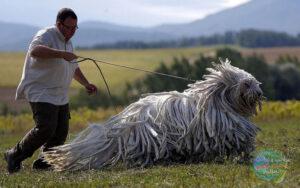 كلب له خيوط