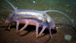 حيوان بحري نادر