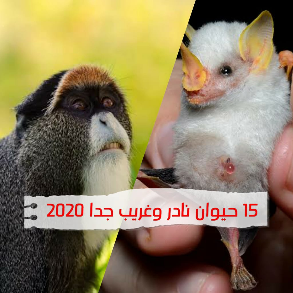 15 حيوان غريب ونادر 2020 عجائب وغرائب وطرائف حول العالم