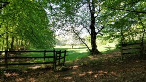 كورونا و الطبيعة