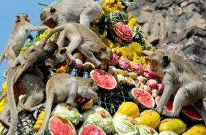 مهرجان القرود