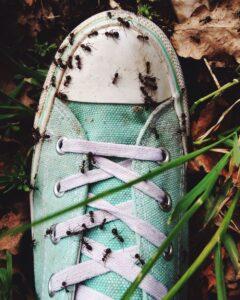 weird phobias myrmecophobia fear ants 1525459184 240x300 - 10 أنواع رهاب غريب لكن موجود بالفعل !!