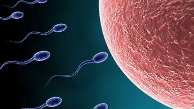 الخصوبة , التوازن الهرموني , زيادة السمنة , الحمل , الإنجاب , الغدد , الماريجوانا , الإجهاض , ولادة , مولود , الحيوانات المنوية , الأعضاء التناسلية , الجنس البشري , التكاثر , الخصاب , المني , الصحة الإنجابية , الولادة , الأولاد , غرائب العالم , غرائب حول العالم , الهرمون , الهرمونات , مشاكل هرمونية