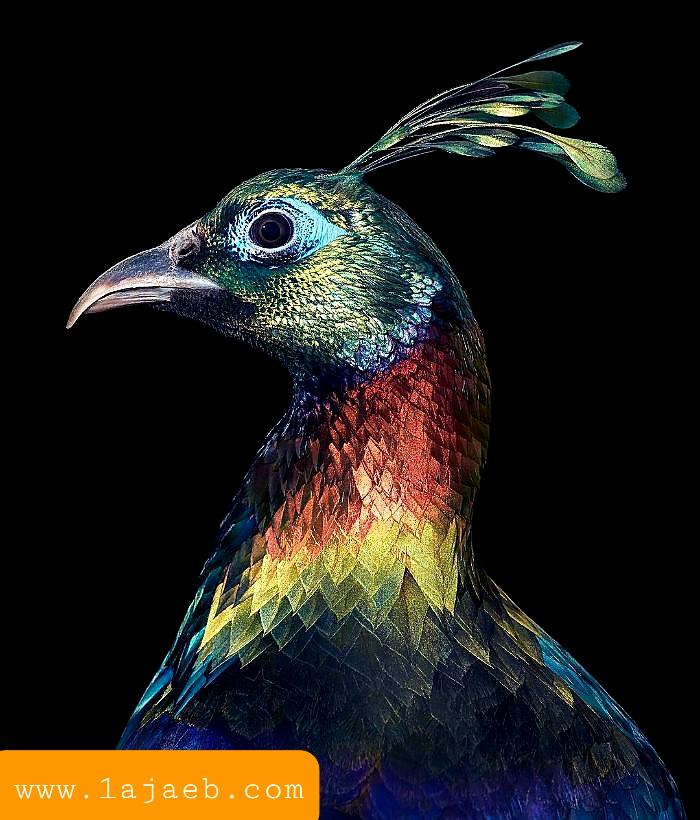 1 30 - مجموعة طيور نادرة رائعة الجمال مهددة بالإنقراض !!