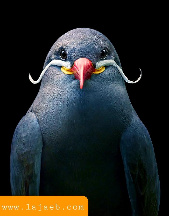1 32 - مجموعة طيور نادرة رائعة الجمال مهددة بالإنقراض !!