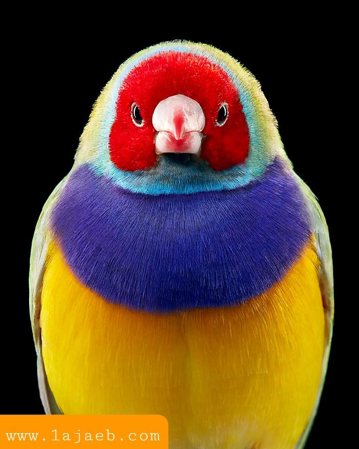 1 33 - مجموعة طيور نادرة رائعة الجمال مهددة بالإنقراض !!
