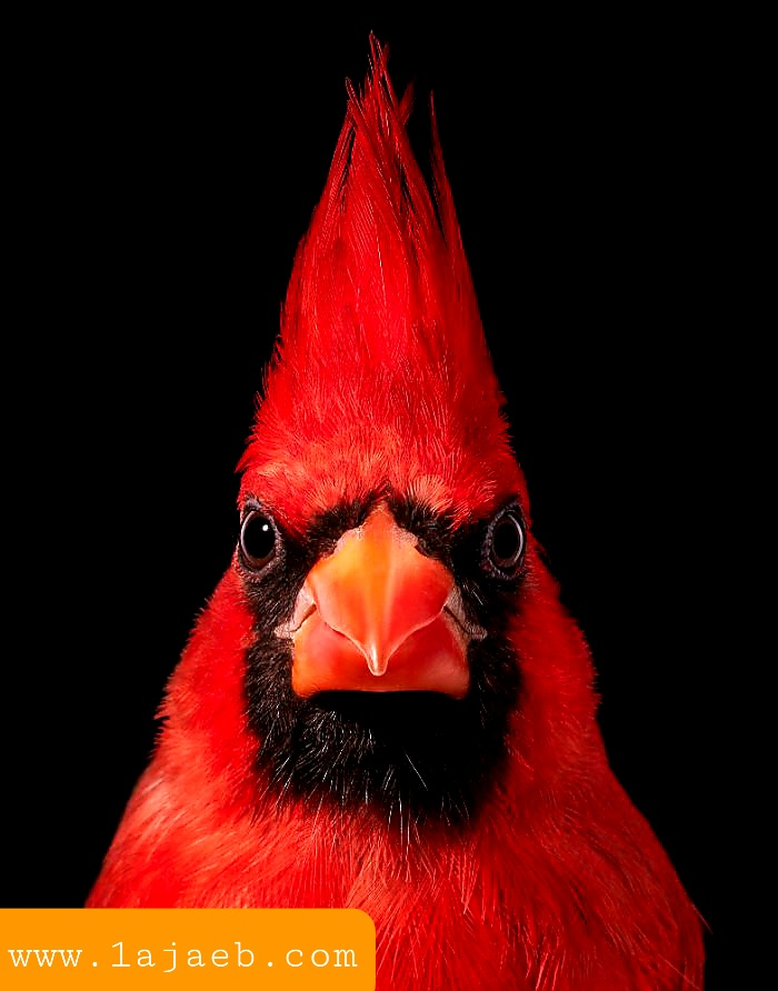 1 35 - مجموعة طيور نادرة رائعة الجمال مهددة بالإنقراض !!