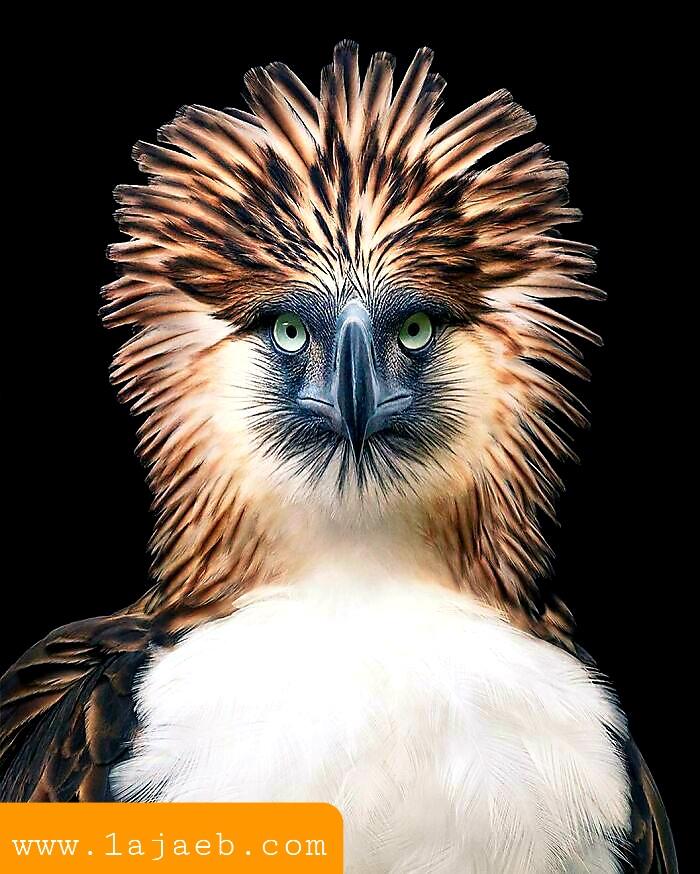1 37 - مجموعة طيور نادرة رائعة الجمال مهددة بالإنقراض !!