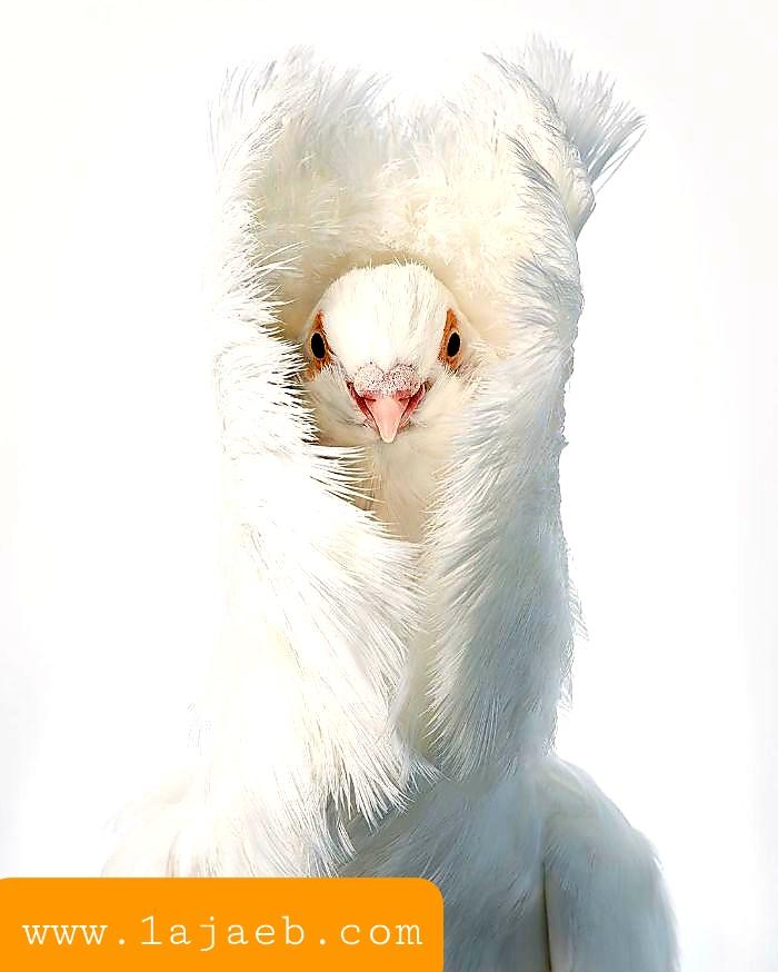1 38 - مجموعة طيور نادرة رائعة الجمال مهددة بالإنقراض !!