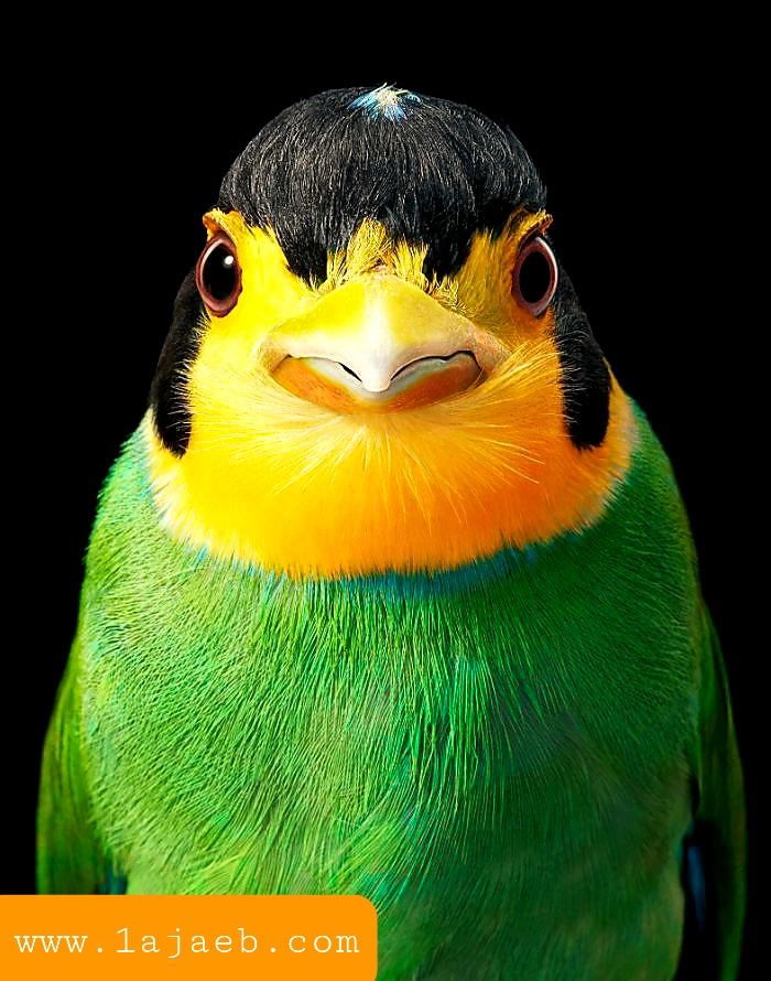 1 39 - مجموعة طيور نادرة رائعة الجمال مهددة بالإنقراض !!
