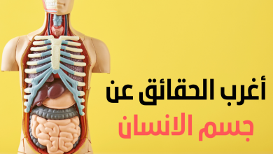 أغرب الحقائق عن جسم الانسان , هل الكبد المتليف يجدد نفسه , منشط للكبد , أنسجة الكبد , هل الكبد يصلح نفسه , هل الكبد ينمو , دواء لتجديد خلايا الكبد , عشبة تجدد خلايا الكبد , أغذية تجدد خلايا وانسجة الكبد المتليف , متلازمة عدم الشعور بالالم , مركز الألم في الدماغ , ضعف الشعور بالالم , عدم الإحساس بالالم في الجلد , سبب عدم الإحساس بالجرح , ضعف الشعور بالالم عند الأطفال , سبب فقدان الإحساس بالالم , نقص الإحساس بالالم , تحليل لعاب الفم , شرح اللعاب , فوائد اللعاب , الأطعمة التي تزيد إفراز اللعاب , فوائد اللعاب بين الزوجين , علاج زيادة اللعاب في الفم , علاج كثرة اللعاب في الفم , كيفية زيادة اللعاب في الفم , كم يزيد طول الإنسان في الشهر , كم يزيد الطول بعد البلوغ , كم سم يزيد الطول بعد أول دورة , هل يتغير طول الإنسان , كم يزيد الطول بعد عمر 16 سنة , كم يزيد طول الإنسان بعد البلوغ , كم يزيد طول الإنسان في السنة , كم يزيد الطول بعد عمر 17 سنة , أمراض الأمعاء الدقيقة , الامتصاص في الأمعاء الدقيقة , اضطرابات الأمعاء الدقيقة , الخملات في الأمعاء الدقيقة , الفرق بين الأمعاء الدقيقة والغليظة , امتصاص الغذاء في الأمعاء الدقيقة , الأمعاء الدقيقة بالانجليزي , وظيفة الصائم في الأمعاء الدقيقة , أغرب المعلومات عن جسم الإنسان , حقائق مرعبة عن الإنسان , حقائق غريبة عن الإنسان , حقائق عن جسم الإنسان , معلومات عن جسم الإنسان وصحته , معلومات مذهلة عن جسم الإنسان , معلومات عن أعضاء الجسم , معلومات غريبة لا يعرفها أحد , أغرب المعلومات عن جسم الإنسان , معلومات مخيفة عن الإنسان , حقائق مدهشة عن جسم الإنسان , معلومات طبية غريبة عن جسم الإنسان , حقائق غريبة عن الإنسان , معلومات عن أعضاء الجسم , هل تعلم عن جسم الإنسان , معلومات عن الأحياء في جسم الإنسان , جسم الانسان , جسم الإنسان جسم انسان , تفاصيل جسم الانسان , اعضاء جسم الانسان , درجة حرارة جسم الانسان الطبيعي , درجة حرارة جسم الانسان الطبيعية , أعضاء جسم الانسان , الاعضاء الجسم الانسان , درجة حرارة جسم الانسان , درجة الحرارة جسم الانسان , حرارة جسم الانسان الطبيعية , حراره الجسم الانسان الطبيعيه , الحرارة العادية لجسم الانسان , اعضاء الجسم , أعضاء الجسم الداخلي للانسان , جسم الإنسان واعضائه , خريطة جسم الإنسان , اجهزة جسم الانسان , جسم الإنسان