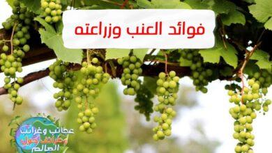زراعة العنب,طريقة زراعة العنب,كيفية زراعة العنب,زراعة العنب من العقل,زراعة العنب من البذور,زراعة عقل العنب,زراعة العنب في المنزل,اسهل طريقة لزراعة العنب,طريقة زراعة العنب من العقل,موعد زراعة العنب,زراعة العنب فى مصر,زراعة بذور العنب,العنب,طريقة زراعة العنب في المنزل,كيف زراعة العنب,شرح زراعة العنب,زراعة العنب من العقل فى المنزل,تعلم زراعة العنب,زراعة اقلام العنب,زراعة العنب يوتيوب,زراعة العنب بالمنزل,زراعة العنب بدون بذور,طريقة زراعة شجرة العنب , زراعة العنب,زراعة العنب من البذور,طريقة زراعة العنب,زراعة العنب في المنزل,كيفية زراعة العنب,زراعة بذور العنب,العنب,زراعة العنب على الاسطح,كيفية زراعة العنب من البذور,زراعة العنب من العقل,زراعة العنب الاحمر,كيف زراعة العنب,زراعة العنب من الاغصان,زراعة العنب في البيت,زراعة العنب من العقلة,زراعة العنب فى مصر,كيف يتم زراعة العنب,زراعة العنب بدون بذور,كيفية زراعة العنب في المنزل,زراعة العنب على اسطح المنازل,زراعة بذور العنب في المنزل,شجرة العنب,زراعة , فوائد العنب,فوائد العنب الاسود,فوائد العنب الاحمر,فوائد بذور العنب,العنب,فوائد العنب الاخضر,فوائد ورق العنب,فوائد عصير العنب,فوائد العنب للصحة,فوائد العنب للحامل,فوائد العنب الصحية,فوائد العنب الأخضر,فوائد قشر العنب,فوائد العنب الأسود للبشرة,فوائد العنب للجنس,فوائد العنب للقلب,فوائد,فوائد العنب للسرطان,فوائد العنب للاطفال,فوائد العنب للنساء,فوائد بذور العنب للجنس,فوائد خل العنب,فوائد العنب الأحمر,فوائد زيت العنب,فوائد العنب واضراره , فوائد العنب,فوائد بذور العنب,فوائد العنب للجنس,فوائد العنب الاسود,فوائد بذور العنب للجنس,فوائد العنب الاحمر,فوائد ورق العنب,العنب,فوائد العنب الاحمر للجنس,فوائد العنب الاخضر,فوائد,فوائد العنب للصحة,فوائد عصير العنب,فوائد العنب الاحمر للحمل,فوائد العنب الاحمر للكبد,فوائد العنب الاحمر للحامل,فوائد العنب الاحمر للبشرة,فوائد العنب للقلب,فوائد الزبيب للجنس,فوائد العنب للحامل,فوائد ممارسة الجنس,فوائد اكل الزبيب للجنس,فوائد العنبر,فوائد خل العنب, أضرار العنب للرجيم , أضرار العنب لمرضى السكر , أضرار العنب للمعدة , أضرار العنب على القولون , أضرار العنب على الكلى , أضرار العنب للحامل , أضرار العنب للكلى , فوائد العنب للكلى , زراعة العنب الأرضي , زراعة العنب بال