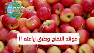 التفاح الأخضر , أنواع التفاح , فوائد التفاح التفاح البنفسجي , أضرار التفاح , فوائد أكل التفاح , فوائد التفاح الأحمر , فوائد التفاح وأضراره , زراعة التفاح pdf , زراعة التفاح في المناطق الحارة , زراعة التفاح في الصحراء , زراعة التفاح في السعودية , زراعة التفاح في تونس , زراعة التفاح بالعقل , زراعة التفاح في البلكونة , زراعة التفاح في المغرب , أضرار التفاح للقولون , أضرار التفاح على القولون , أضرار التفاح على الريق , أضرار التفاح الأخضر قبل النوم , , أضرار التفاح للحامل , أضرار التفاح للحامل في الشهور الأولى , فوائد التفاح للنساء , أضرار التفاح الأخضر للحامل , أضرار التفاح الأخضر قبل النوم , أضرار التفاح الأخضر للحامل , أضرار التفاح على الريق , مضار التفاح قبل النوم , أضرار التفاح على القولون , فوائد التفاح الأخضر للتنحيف , فوائد التفاح الأخضر للرجال , فوائد التفاح الأخضر على الريق , أضرار التفاح الأخضر للحامل , أضرار التفاح للحامل في الشهور الأولى , التفاح الاخضر للحامل عالم حواء , فوائد التفاح للحامل على الريق , عصير التفاح للحامل في الشهور الأولى , فوائد التفاح للحامل في الشهور الأولى , فوائد التفاح لجمال الجنين , التفاح الأخضر للحامل في الاشهر الأولى , رجيم التفاح الأخضر والماء , التفاح الأخضر لحرق الدهون , دواء التفاح الأخضر للتنحيف , تجربتي مع رجيم التفاح الاخضر , فوائد التفاح الأخضر قبل النوم , تجربتي مع التفاح الاخضر للتنحيف , فوائد التفاح الأخضر على الريق , فوائد تفاح الأخضر للحامل , فوائد التفاح الأخضر للتخسيس , فوائد التفاح الأخضر للجنس , فوائد التفاح الأخضر للرجال , فوائد التفاح الأخضر قبل النوم , فوائد التفاح الأخضر للمعدة , فوائد التفاح الأخضر على الريق , فوائد التفاح الأخضر للبشرة , فوائد التفاح الأخضر لمرضى السكري , فوائد التفاح للاخصاب , فوائد التفاح قبل النوم , فوائد التفاح للجماع , فوائد التفاح للبشرة , فوائد التفاح للحامل , فوائد التفاح الأخضر , فوائد التفاح الأحمر , فوائد التفاح للمني , فوائد التفاح الأحمر قبل النوم , فوائد التفاح للنساء , فوائد التفاح الأحمر للرجيم , فوائد التفاح الأحمر للقلب , فوائد التفاح الأحمر للشعر , فوائد التفاح الأحمر للكلى , فوائد التفاح الأحمر على الريق , أضرار أكل التفاح على الريق , فوائد التفاح للمني , التفاح والانتصاب 