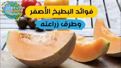 زراعة البطيخ الأصفر , الفرق بين البطيخ الأصفر والأحمر , القيمة الغذائية وفوائد البطيخ الأصفر , فوائد البطيخ الأصفر وطرق زراعته , زراعة البطيخ الأصفر في سوريا , زراعة البطيخ الأصفر في الجزائر , شهر زراعة البطيخ الاصفر , زراعة البطيخ الأصفر في العراق , زراعة البطيخ الاصفر في المغرب pdf , زراعة البطيخ في المنزل , زراعة البطيخ الاصفر في تونس , زراعة البطيخ الاصفر في المغرب , بطيخ الأصفر , أضرار البطيخ الأصفر , فوائد البطيخ الأصفر , فوائد البطيخ الأصفر للرجال , اين يوجد البطيخ الأصفر , اين يباع البطيخ الأصفر , سعرات البطيخ الأصفر , هل العجور هو البطيخ الأصفر , السعرات الحرارية في البطيخ الأصفر , فوائد البطيخ الأصفر , القيمة الغذائية للشمام الأصفر , أضرار البطيخ الأصفر , نسبة الكربوهيدرات في البطيخ الأصفر , فوائد البطيخ الأصفر الشمام , نسبة البروتين في البطيخ الأصفر , فوائد البطيخ الأصفر للرجال , البطيخ الأصفر , زراعة البطيخ الأصفر , زراعة البطيخ الأصفر في سوريا , موعد زراعة البطيخ , مراحل نمو البطيخ بالصور , اسم البطيخ الأصفر , زراعة البطيخ في تونس pdf , سعر البطيخ الأصفر , فوائد البطيخ الاصفر , بذور البطيخ , فوائد البطيخ للبروستاتا , البطيخ للحامل , فوائد البطيخ للحامل , هل الحبحب يزيد الوزن , فوائد البطيخ الاحمر , فواءد البطيخ الاحمر , فوائد بطيخ الاحمر , البطيخ والرجيم , فوائد الحبحب , فوائد البطيخ للتخسيس , فوائد البطيخ , فوائد الشمام , فواءد قشر البطيخ , طرق زراعة البطيخ , هل البطيخ يزيد الوزن , فوائد البطيخ للمتزوجين , هل البطيخ يرفع السكر , أضرار البطيخ , فوائد البطيخ للرجيم , فوائد الجح , فوائد البطيخ للنساء , فوائد الدلاع , فوائد البطيخ للرجال , فوائد البطيخ للمعدة , فوائد عصير البطيخ , فوائد الرقي , اضرار البطيخ , فوائد البطيخ واضراره , ما فوائد البطيخ , هل الشمام يرفع السكر , هل البطيخ يسمن , فوائد الدلاح , البطيخ والسكري , أضرار البطيخ على القولون , فوائد الجبس , أضرار البطيخ الأصفر , فوائد البطيخ للكلى , فوائد قشر البطيخ للرجال , ما هي فوائد البطيخ , فوائد البطيخ للقولون , فوائد البطيخ الاحمر للحامل , هل البطيخ بيتخن , هل البطيخ الأصفر يزيد الوزن , فوائد بذور البطيخ , قشر البطيخ , فوائد بزر البطيخ الحبحب للحامل , فوائد البطيخ الأصفر للرجال , فوائد عصير الحبح