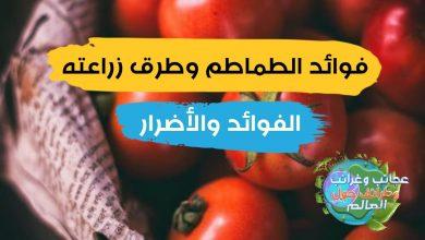زراعة الطماطم من البذور , ثمرة الطماطم , فوائد الطماطم وقيمتها الغذائية , فوائد الطماطم وطرق زراعتها , فوائد الطماطم الأخضر , فوائد الطماطم للدم , فوائد الطماطم للرجال , فوائد الطماطم للمرأة , فوائد الطماطم للرجيم , فوائد الطماطم للحامل , فوائد الطماطم لكمال الأجسام , فوائد الطماطم للالتهابات , كيفية زراعة البندورة المتسلقة , وقت زراعة البندورة , طريقة زراعة البندورة في المنزل , زراعة الطماطم في الصيف , مدة زراعة الطماطم , أسرار زراعة الطماطم , طريقة زراعة شتلات الطماطم , زراعة الطماطم بالتنقيط , فوائد الطماطم للبروستاتا , بذور طماطم شيري , فوائد الطماطم , اضرار الطماطم , شجرة الطماطم , زراعة الطماطم في الصيف , فوائد الطماطم للحامل , فوائد الطماطم للرجال , طرق زراعة البندورة , فوائد البندورة , زراعة الطماطم , فوائد عصير الطماطم , فواءد الطماطم , زراعة الطماطم من البذور , فوائد عصير البندورة , طريقة زراعة شتلات الطماطم , فوائد الطماطم للدم , زراعة البندورة , أضرار الطماطم , زراعة الطماطم في البيت , فوائد الطماطم للالتهابات , كيفية زراعة الطماطم , وقت زراعة الطماطم , فوائد اكل الطماطم , فوائد البندوره , زراعة الطماطم فى المنزل , طريقة زراعة الطماطم , فوائد اكل الطماطم قبل النوم , فوائد البندورة للحامل , زراعة الطماطم بالتنقيط , كيف تزرع الطماطم , مدة زراعة الطماطم , متى تزرع الطماطم , كم كيلو تنتج شتلة الطماطم , فائدة الطماطم , زراعة البندورة في المنزل , فوائد الطماطم للقلب , موسم زراعة الطماطم , فوائد الطماطم للاطفال , ما هي فوائد الطماطم , هل الطماطم يزيد الوزن , الطماطم والرجيم , أضرار الطماطم على الكلى , هل معجون الطماطم يزيد الوزن , زراعة الطماطم في البيوت البلاستيكية pdf , فوائد الطماطم للرجيم , فوائد الطماطم واضرارها , كيفية زراعة الطماطم في المنزل , زراعة الطماطم في المنزل بالصور , زراعة الطماطم في أصيص , مواعيد زراعة الطماطم , فترة إنبات بذور الطماطم , فوائد الطماطم على الريق , فوائد عصير الطماطم لفقر الدم , فوائد الطماطم للجسم , فوائد عصير الطماطم مع الثوم , موعد زراعة الطماطم , ما فوائد الطماطم , الطماطم والسكري , زراعة الطماطم في الشتاء , تسميد الطماطم في المنزل , فوائد أكل الطماطم على الريق , كيف ازرع طماطم , زراعة الطماطم في البيوت البلاستيكية , مراحل نم